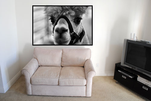 couch with oversized animal art