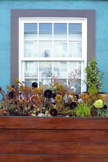 SF home planter